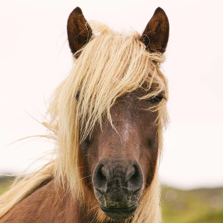 cavalos são os animais mais perigosos da australia