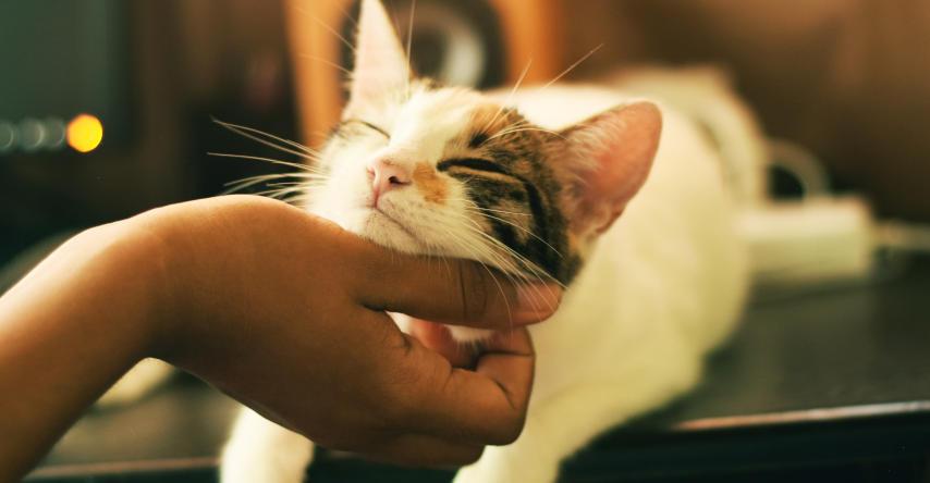 gato recebendo carinho