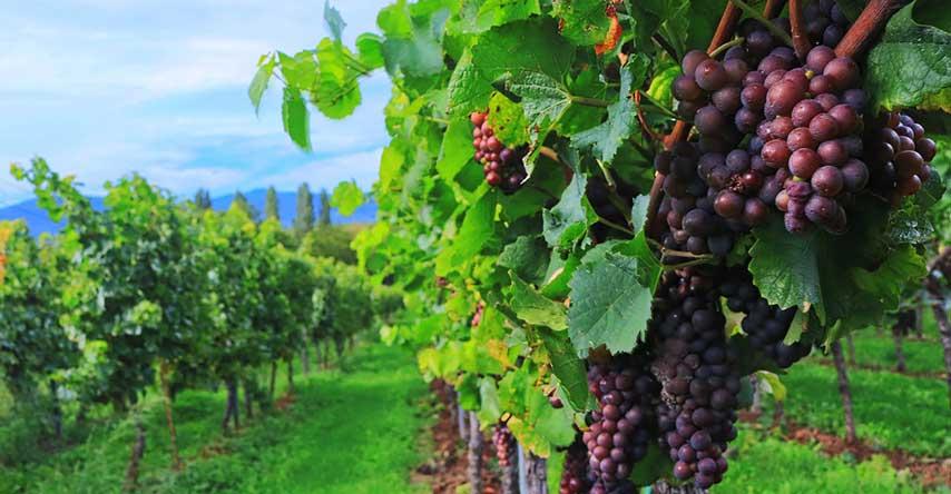 vinícola em margaret river